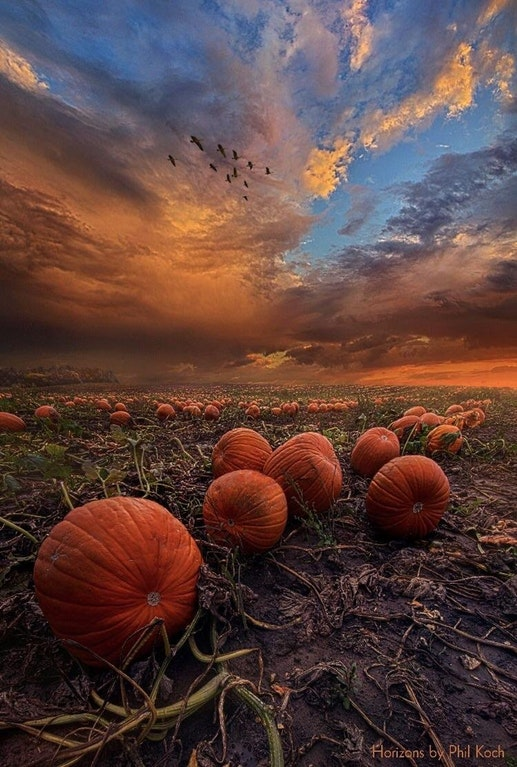 pumpkin sunset