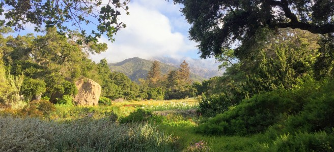 in the santa barbara botanic garden - Santa Barbara Botanic Garden
