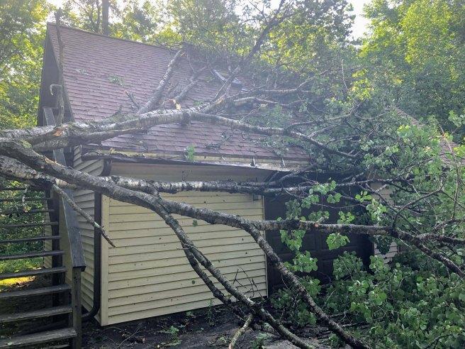 garage tree